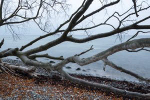 upturned tree on the beach